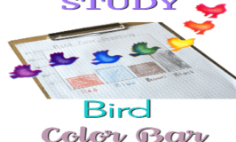Hands-On Nature Study: Bird Color Bar Graphing Activity