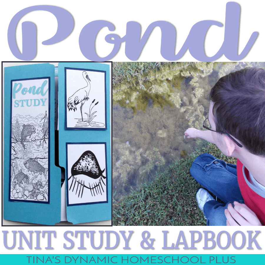Looking for a fun and free multiple age Pond Unit Study and lapbook? You'll love these resources whether you study a pond in the winter, summer, spring or fall. Check out this what is above and what is below in a pond homeschool unit study and free awesome lapbook. CLICK HERE!!