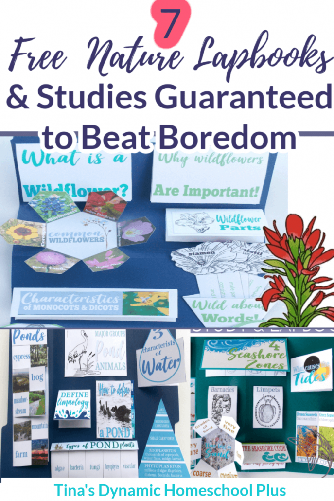 7 Super Easy and Free Nature Lapbooks Guaranteed to Beat Boredom. Nature studies revive the most listless learner and teacher. Grab these beautiful printable lapbooks and hands-on unit study nature study ideas at Tina's Dynamic Homeschool Plus!