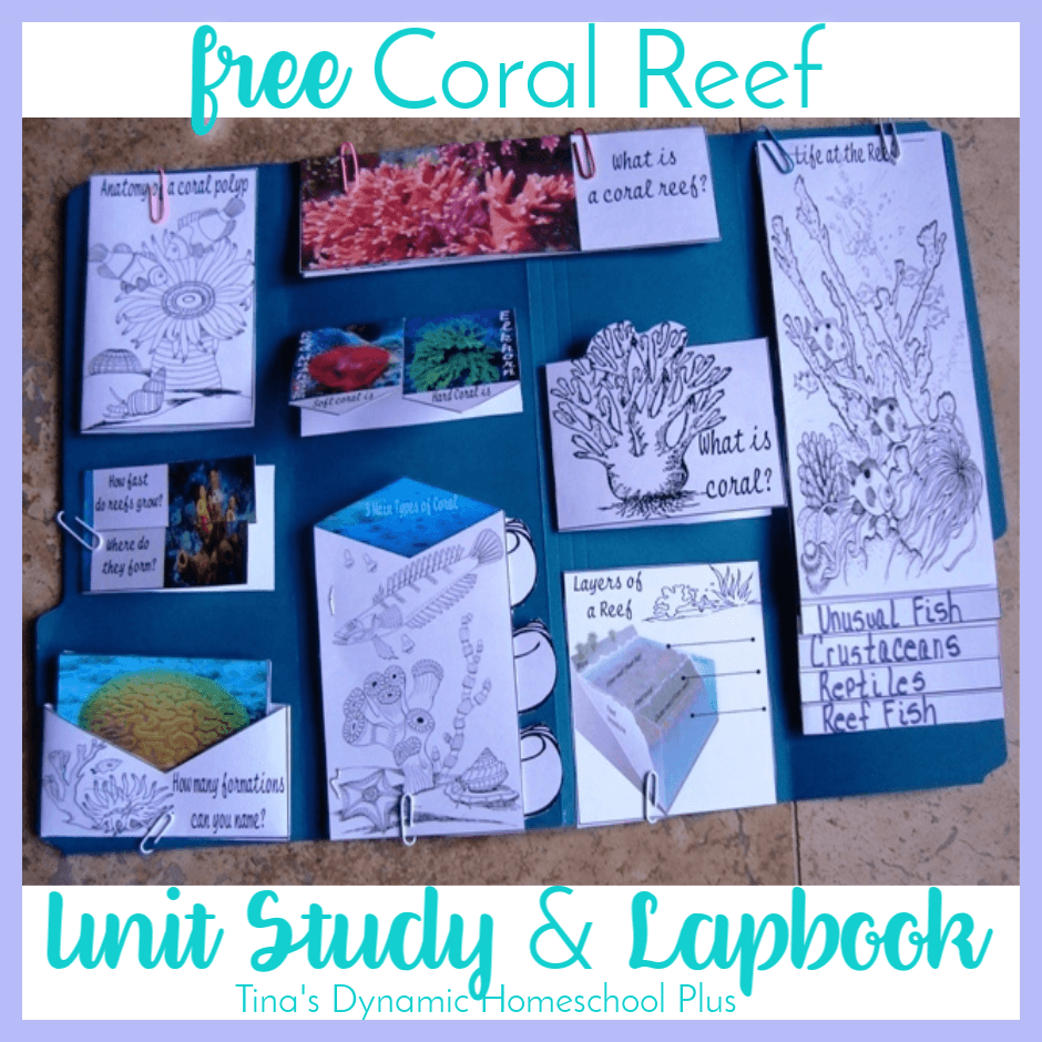 Whether you're studying the Coral Reef as a separate unit study or part of the Ocean, you'll love this free lapbook and unit study resources. CLICK here to grab the free Coral Reef Unit Study and Lapbook!