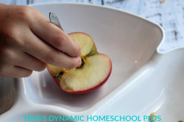 5 Apple seed investigation Easy Seed and Gardening Unit Study for Kids Middle - Upper Elementary @ Tina's Dynamic Homeschool Plus