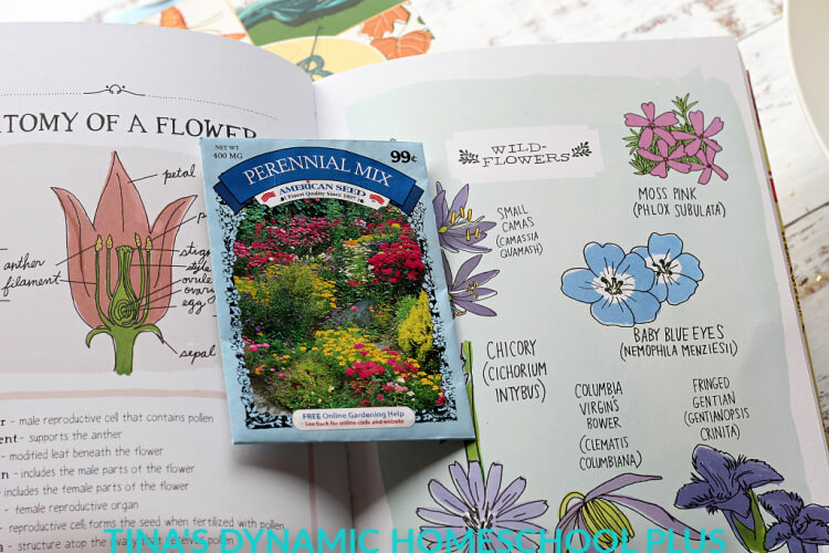 6 Seed packets and books Easy Seed and Gardening Unit Study for Kids Middle - Upper Elementary @ Tina's Dynamic Homeschool Plus