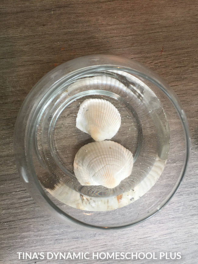1 How to Dissolve a Seashell - Beach Hands-on Fun Activity immediate bubbling