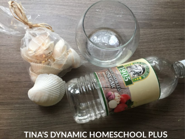 How to Dissolve a Seashell Activity Ingredients