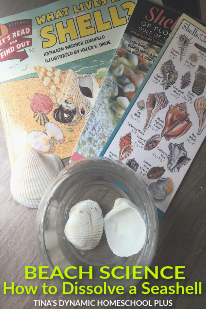 How to Dissolve a Seashell - Beach Hands-on Fun Activity. Whether you're doing an Ocean or Beach theme, your kids will love this EZ activity. Click here!