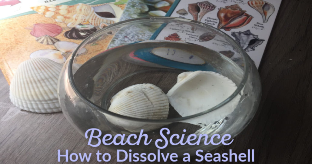 How to Dissolve a Seashell EZ beach themed or ocean themed hands-on fun activity @ Tina's Dynamic Homeschool Plus