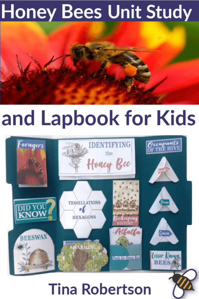 Whether you want to learn about how honey bees are fascinating master pollinators, learn about the interesting social activities in the hive, learn about beeswax, or know what is honey, these honey bee activities and resources will be helpful. You'll love these fun honey bees lapbook! CLICK HERE to grab it! #lapbook #honeybees #unitstudy #homeschoolscience #handsonlearning