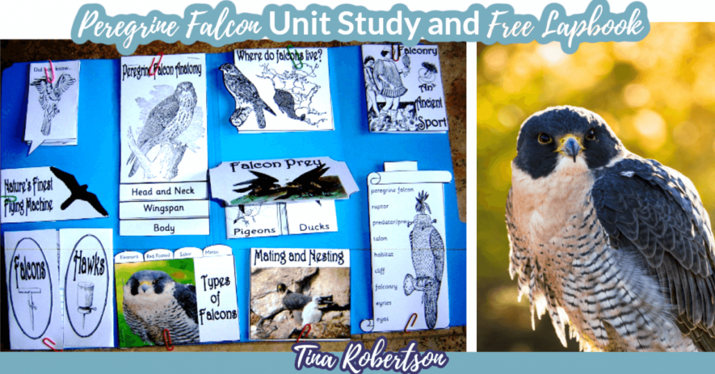 Peregrine Falcon Unit Study and Lapbook by Tina Robertson