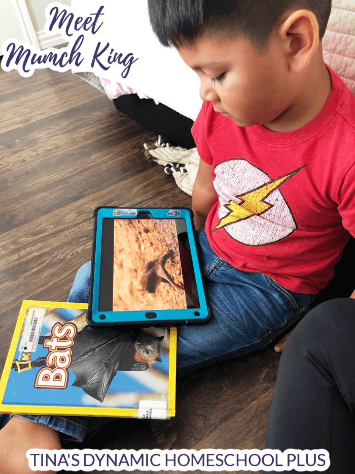 Why Bats Are Not Birds Fun Homeschool Unit Study and Lapbook. Your kids will love studying about bats in the fall or anytime. Hands-on ideas for multiple ages to learn about the various kinds of bats. Grab the unit study ideas for multiple ages and the bat lapbook for older kids. CLICK HERE to grab it at Tina's Dynamic Homeschool Plus.