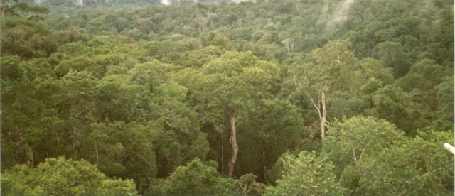 H. Bruce Rinker Ph.D. wrote an article entitled Conservation from the Treetops The Emerging Science of Canopy Ecology. He helps us to understand how the ... & Rain Forest - Amazon