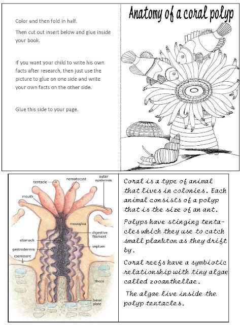 dynamic anatomy pdf download free