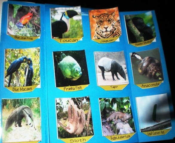 amazon rainforest plants collage. amazon rainforest plants collage r