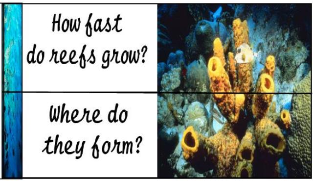 Coral Reef Unit Study, Lapbook and Hands-on Ideas